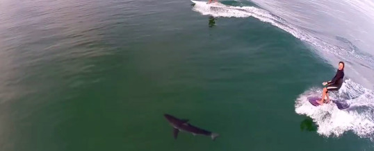Paddle boarding shark encounter!